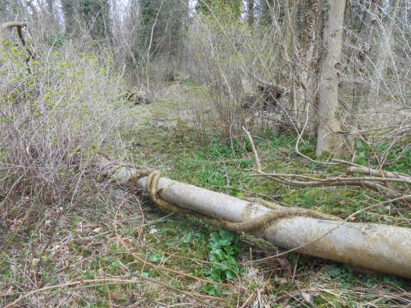 Jeg kan anbefale, at gå en tur på denne indtil nu uberørte skovsti, hvor lianer har ædt adskillige træer. Foto©JørgenKoefoed.