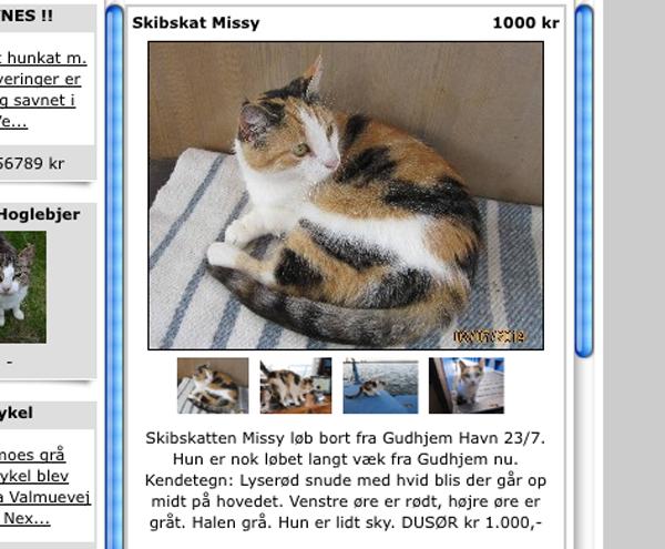 efterlysning kat nordjylland