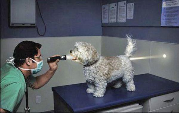 politi hund og pudelhund